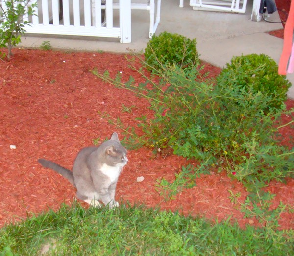 One of the resident cats next to the gazebo