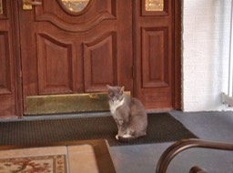 The first cat waiting to go inside